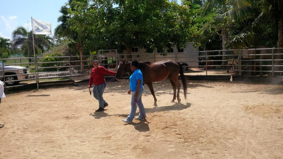 Equine (Horse)-Assisted Therapy and Learning | Dr. Alexandra Bodden